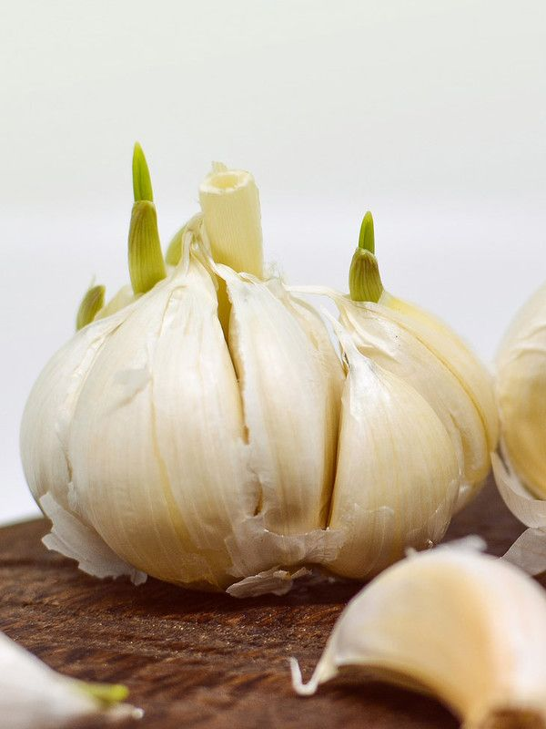 Regrowing Knoblauch