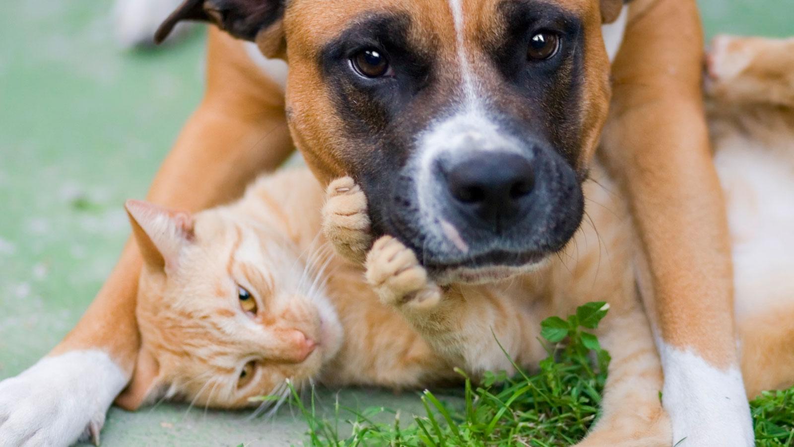 Schönes Tierfoto von Hund und Katze.