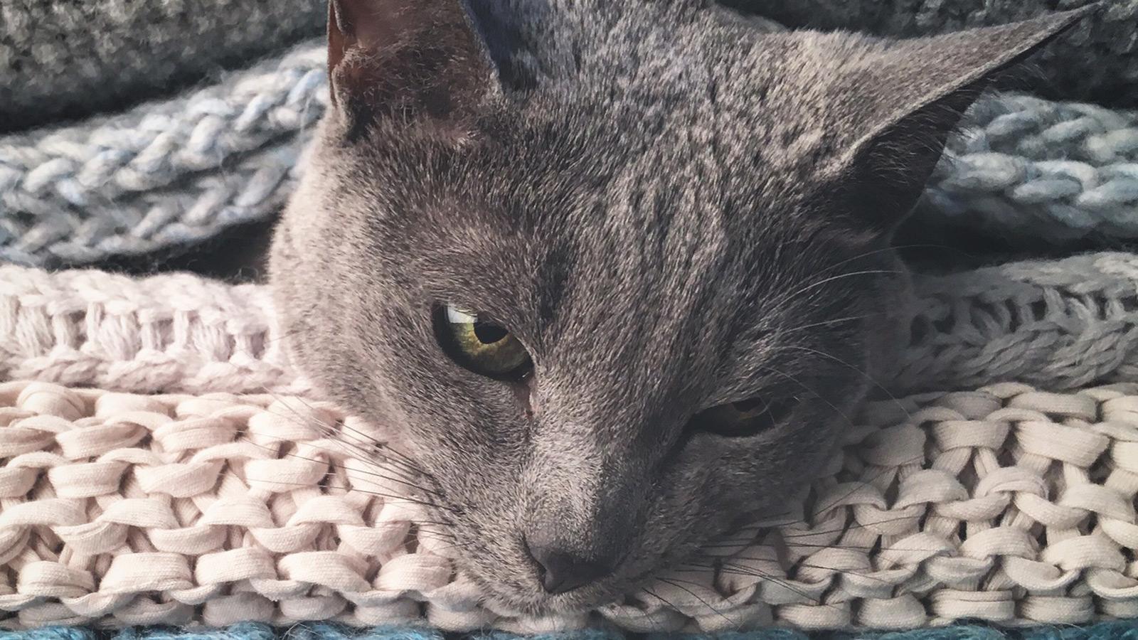 Katze kuschelt zwischen Kleidung