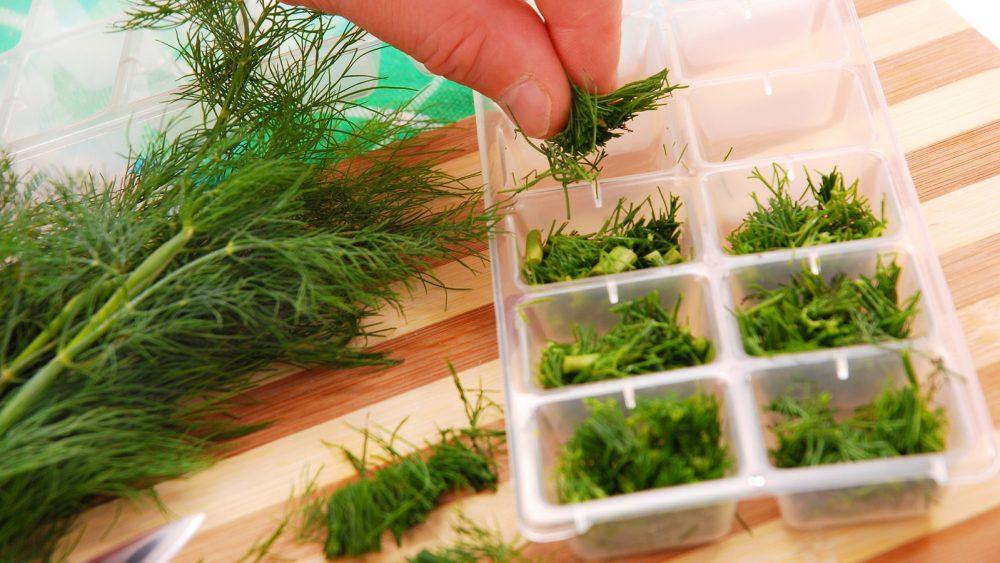 Kräuter in Eiswürfel-Box einfrieren