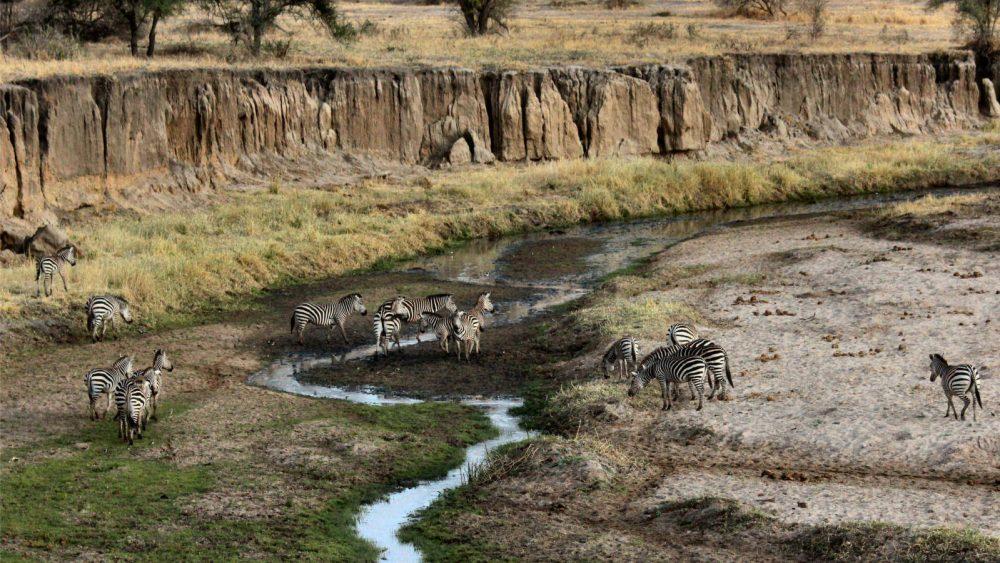 Reisefotografie Safari Zebras