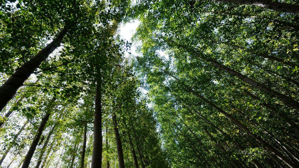 Ein Wald von unten fotografiert