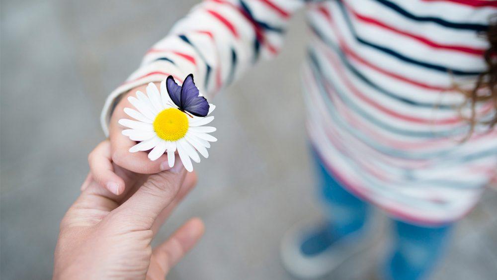 Bild mit Blume und einem freigestellten Schmetterling