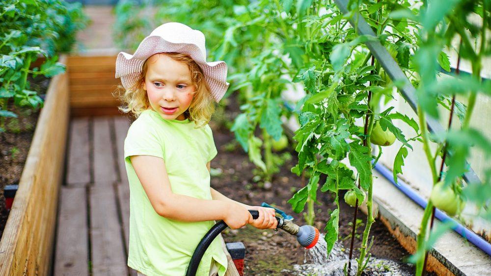 Mädchen bewässert einen Gemüsegarten mit Tomatenpflanzen