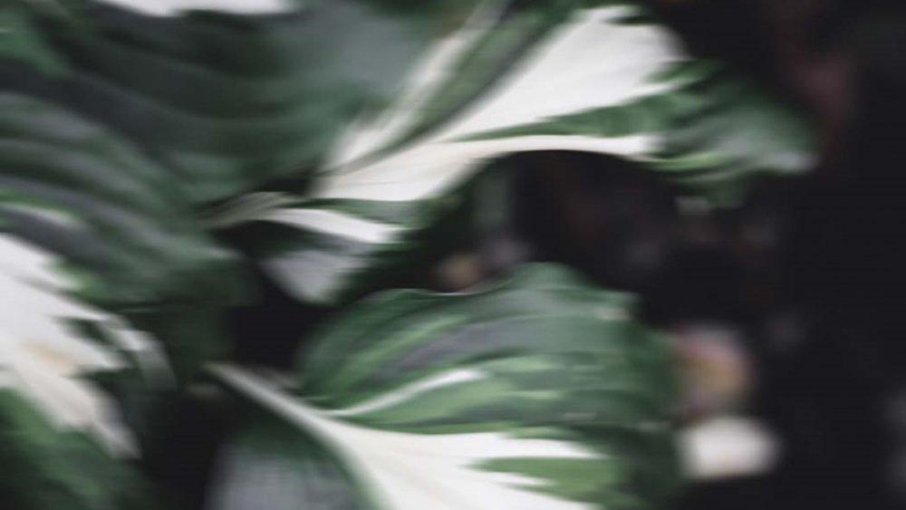 Grüne Blätter mit Bewegungsunschärfe abstrakt fotografiert