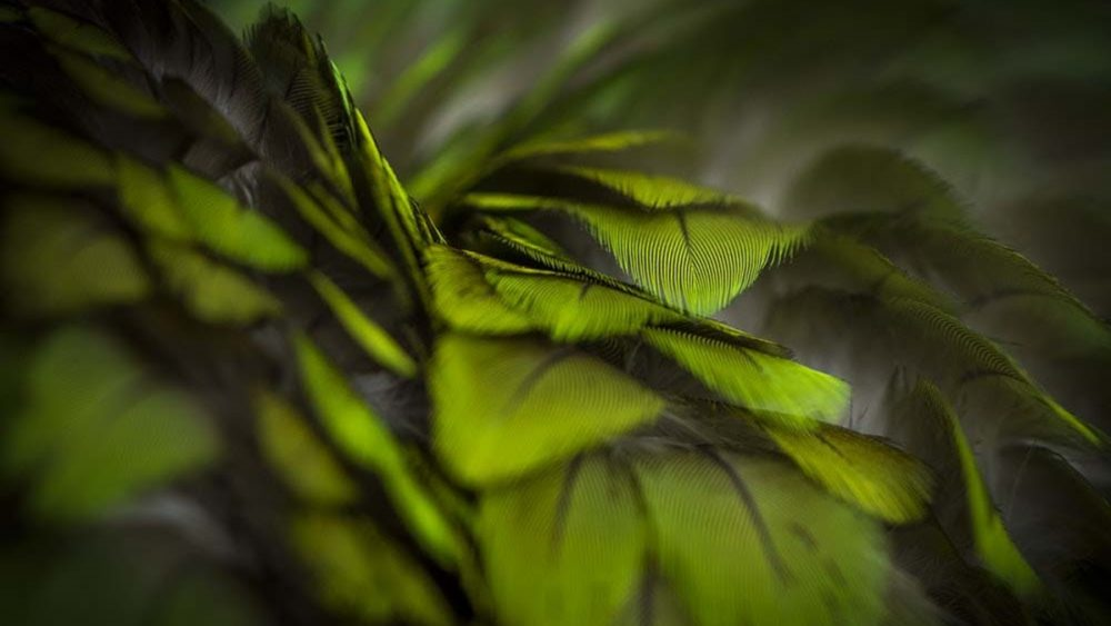 Abstrakte Fotografie mit Federn und Unschärfe-Effekt