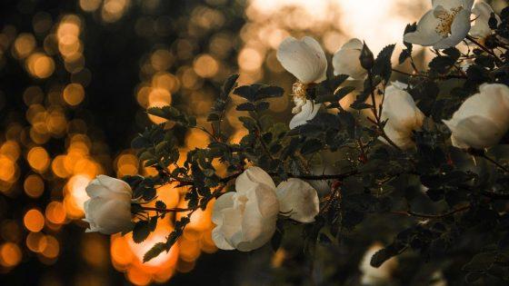 Bokeh-Effekt: Große Blende bei schwachem Licht