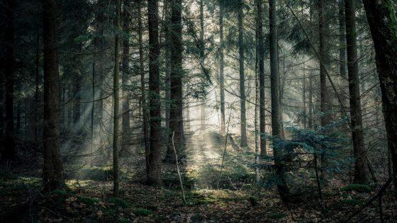 Wald-Fotografie: Tipps und Tricks für schöne Fotos von der Natur