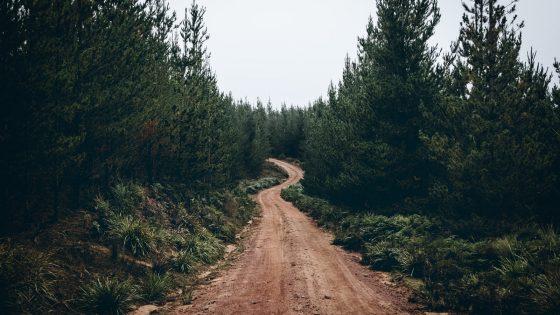 Wald-Fotografie: Blendenöffnung