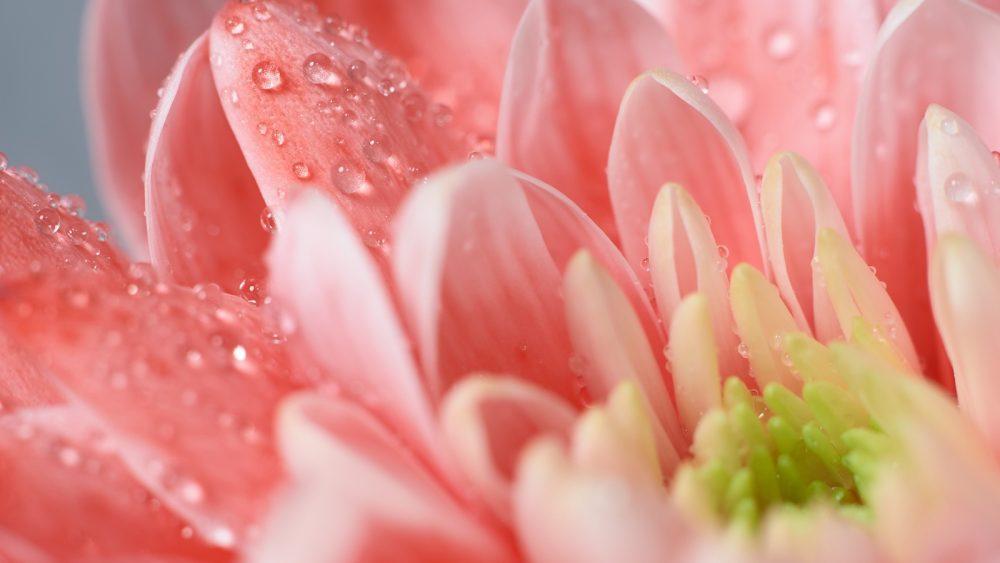 Per Makrofotografie lassen sich Blumen besonders schön fotografieren