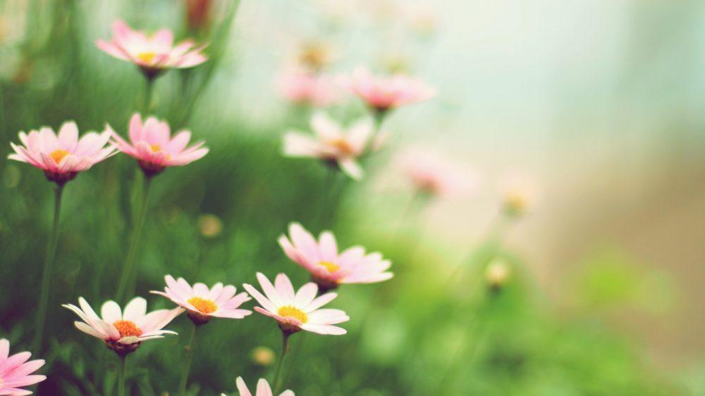 Blumen bei geöffneter Blende fotografieren und schöne Detailaufnahmen erhalten