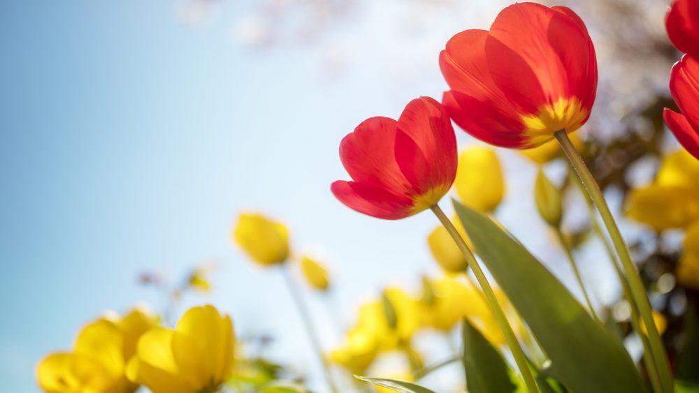 Blumen von unten fotografieren