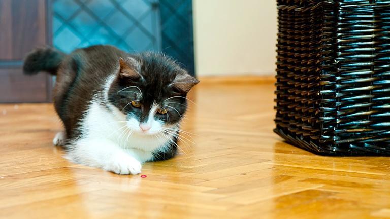 Katze spielt auf dem Boden
