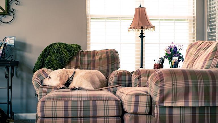 Hund liegt auf dem Sofa
