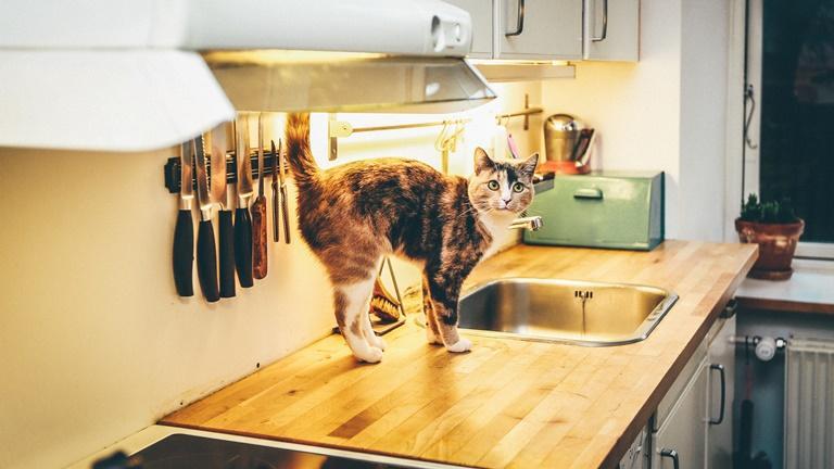 Katze auf der Küchenarbeitsplatte