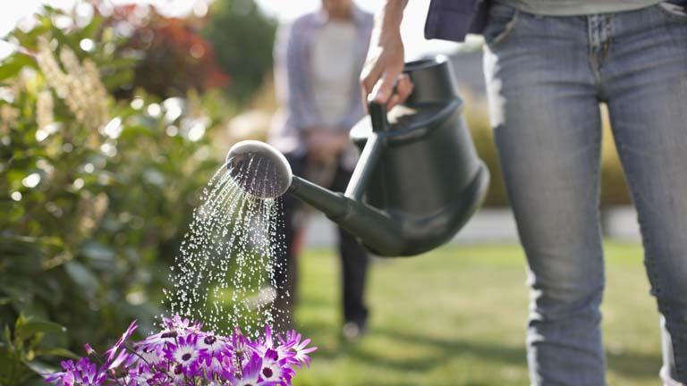 Pflanzenbewässerung mit einer Gießkanne