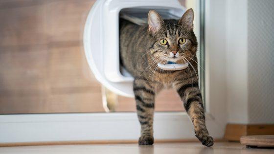 Katze mit GPS-Tracker in Katzenklappe