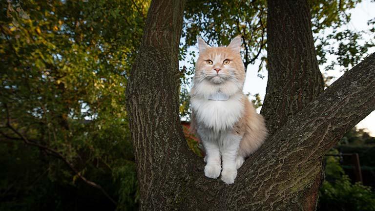 Katze mit GPS-Tracker sitzt in einem Baum