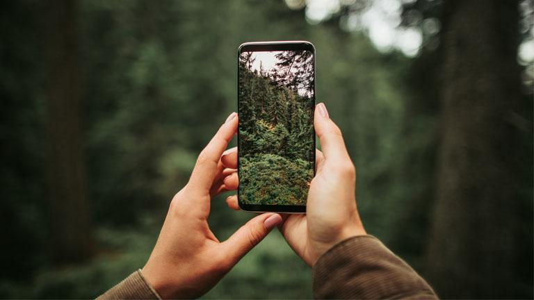 Eine Frau fotografiert Bäume