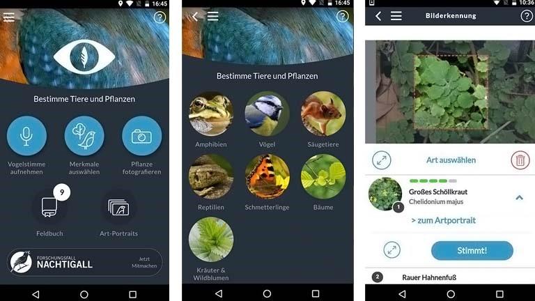 Pflanzen bestimmen mit der App Naturblick