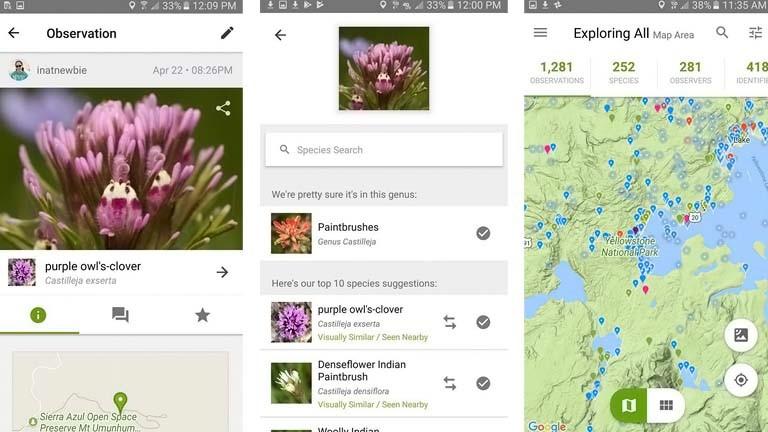 iNaturalist: Pflanzen per App bestimmen und mit Wissenschaftlern forschen