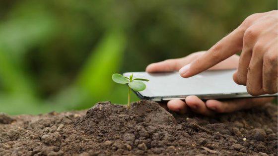 Pflanzen bestimmen per App: Mit Foto- oder Filtersuche Blumen, Bäume und andere Pflanzen erkennen