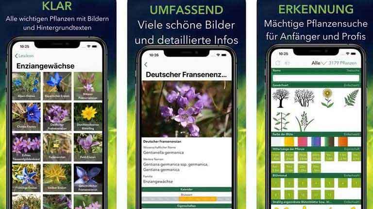 App Krautfinder einfache Pflanzenbestimmung
