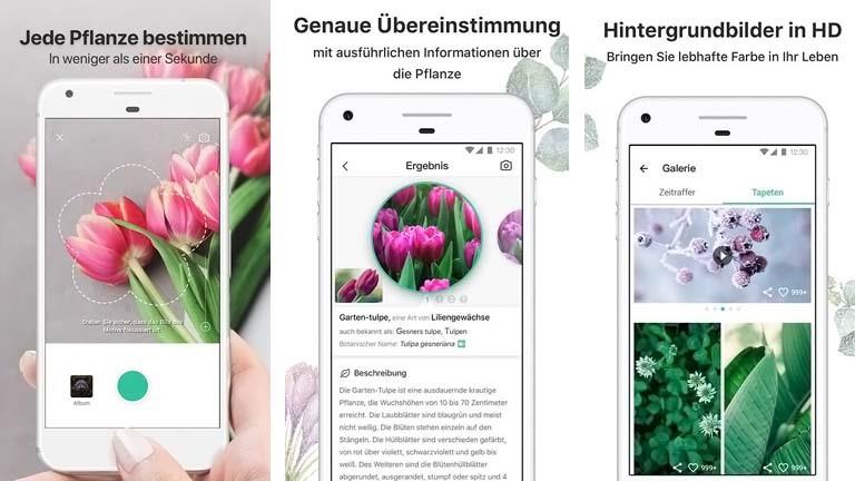 PictureThis: App zum Pflanzenbestimmen