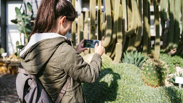 Eine Person steht vor Kakteen und fotografiert diese mit dem Handy.