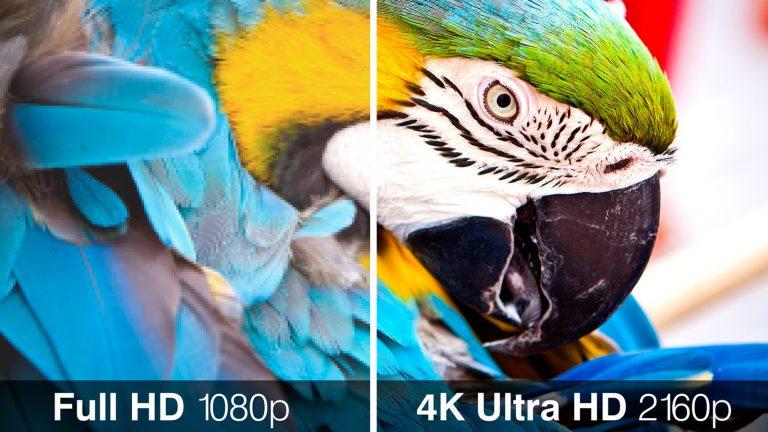 Ein Bild von einem Papagei zeigt den Vergleich zwischen FHD und UHD.